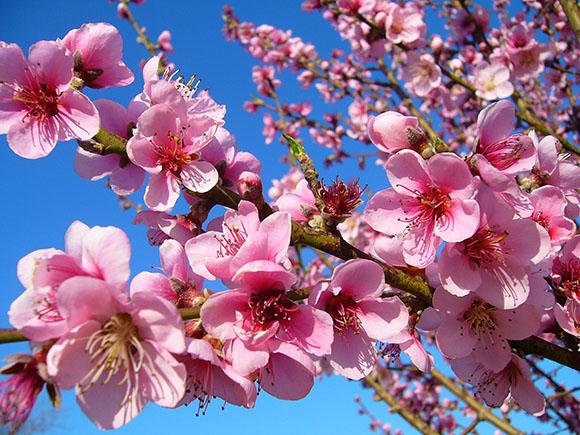 Viaja en autobús a la celebración de la floración de Cieza